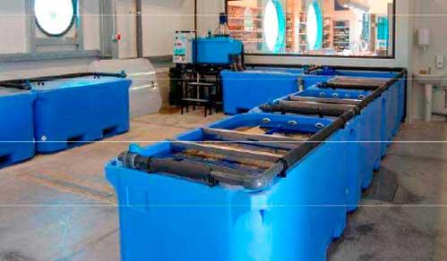 Системы хранения и передержки морепродуктов 2