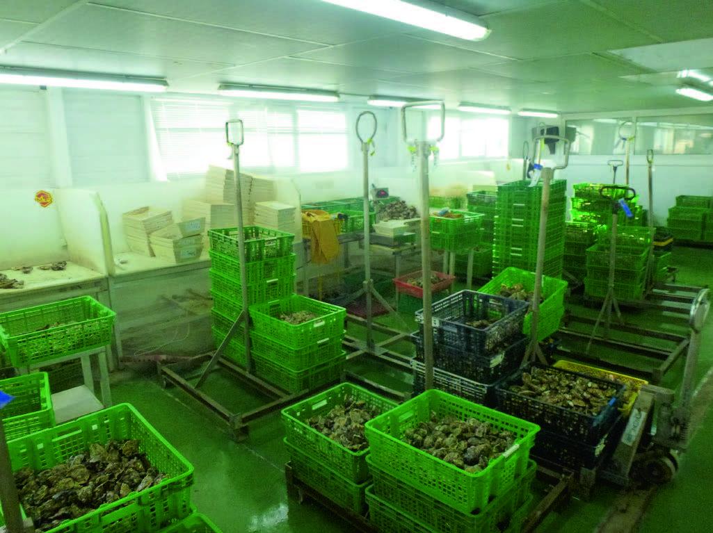 Системы хранения и передержки морепродуктов 4