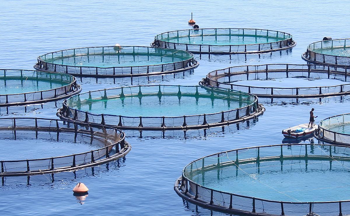 Разведение устриц в Черном море 1