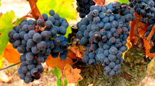 Винодельческое хозяйство 3