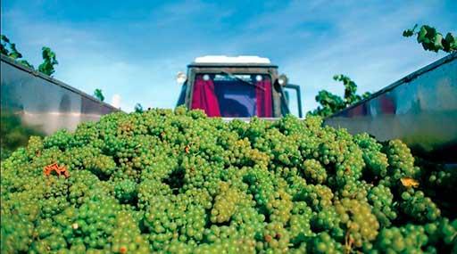 Винодельческое хозяйство 5
