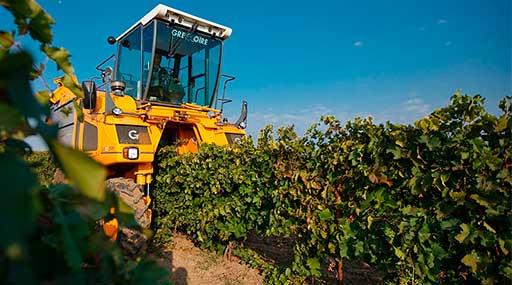 Винодельческое хозяйство 4