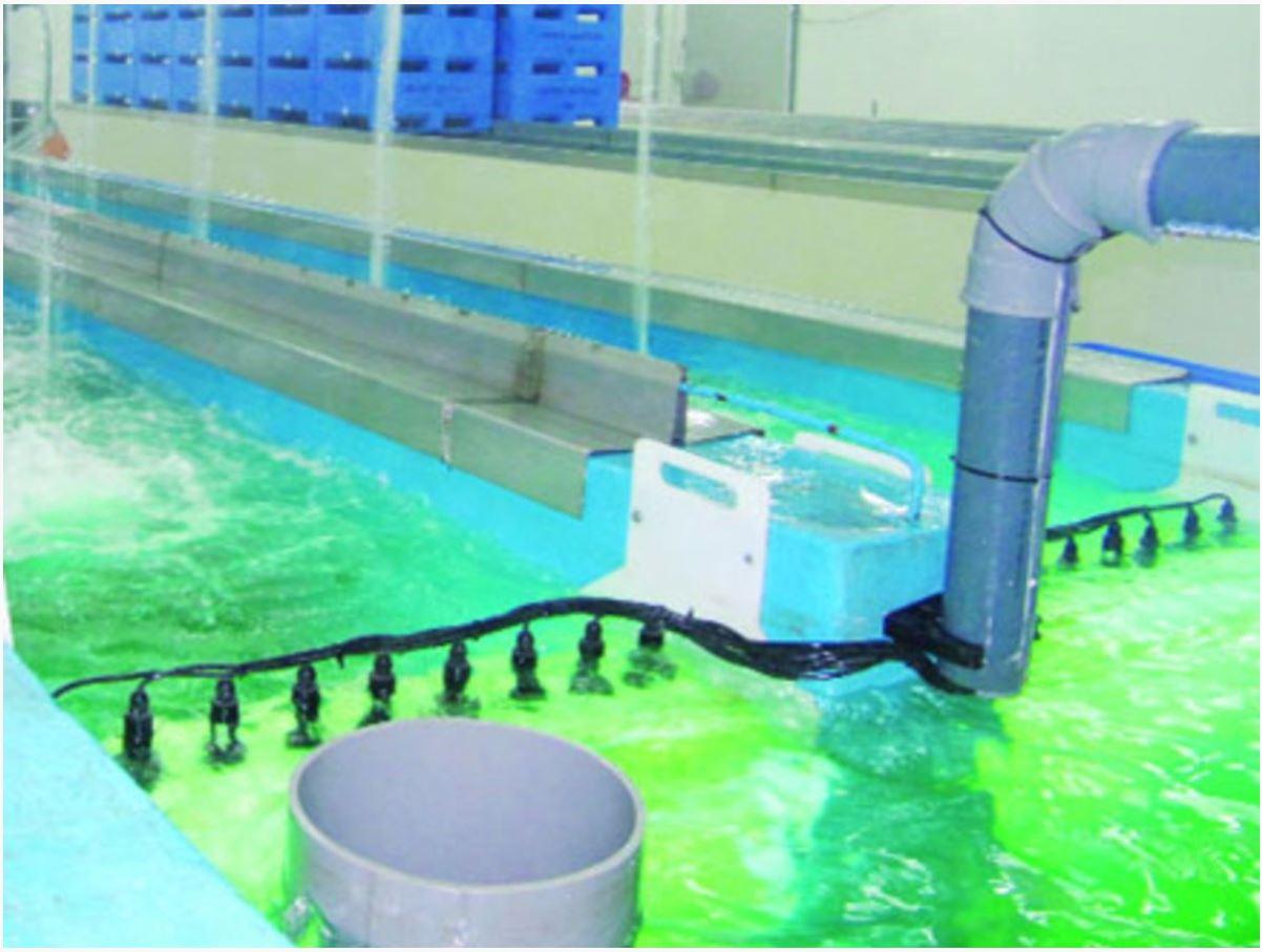 Оборудование для разведения аквакультуры в УЗВ 3