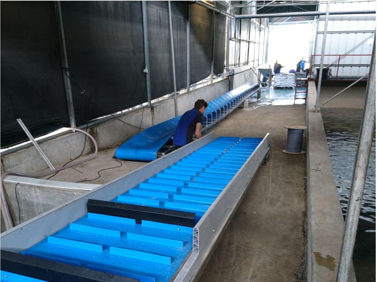 Оборудование для переработки рыбы 1