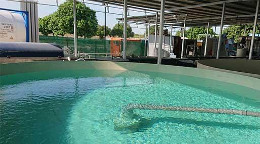Разведение Рыбы в Водоемах и УЗВ 3