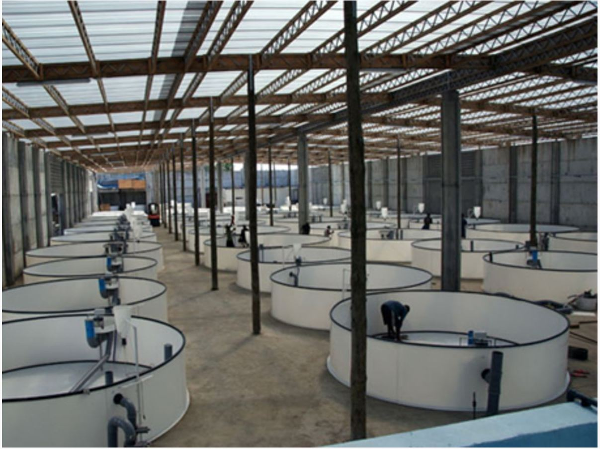 Оборудование для разведения аквакультуры в УЗВ 6