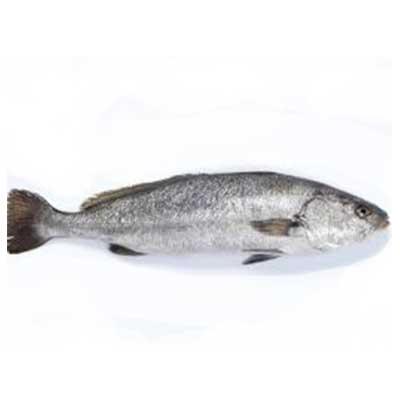 Производство Аквакультуры в пресной и соленой воде 21