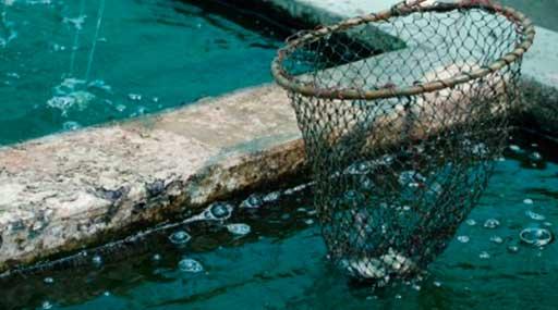 Разведение рыбы в водоемах и УЗВ 1