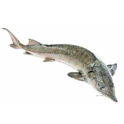 Производство Аквакультуры в пресной и соленой воде 3