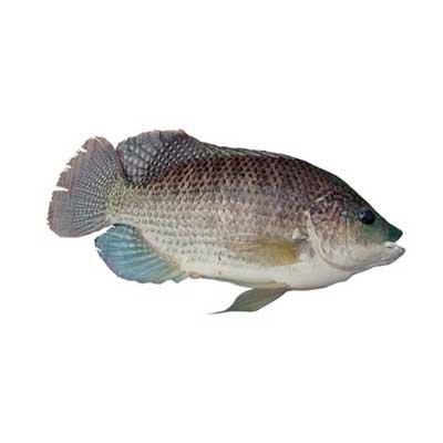Производство Аквакультуры в пресной и соленой воде 8