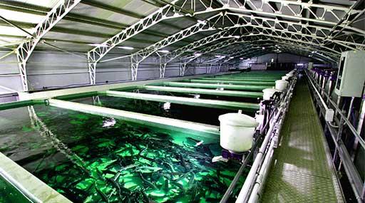 Разведение Рыбы в Водоемах и УЗВ 2