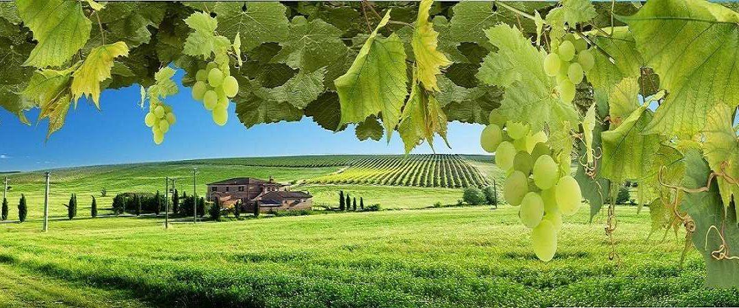 Виноделие под ключ