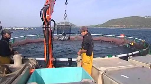 Разведение Рыбы в Водоемах и УЗВ 8