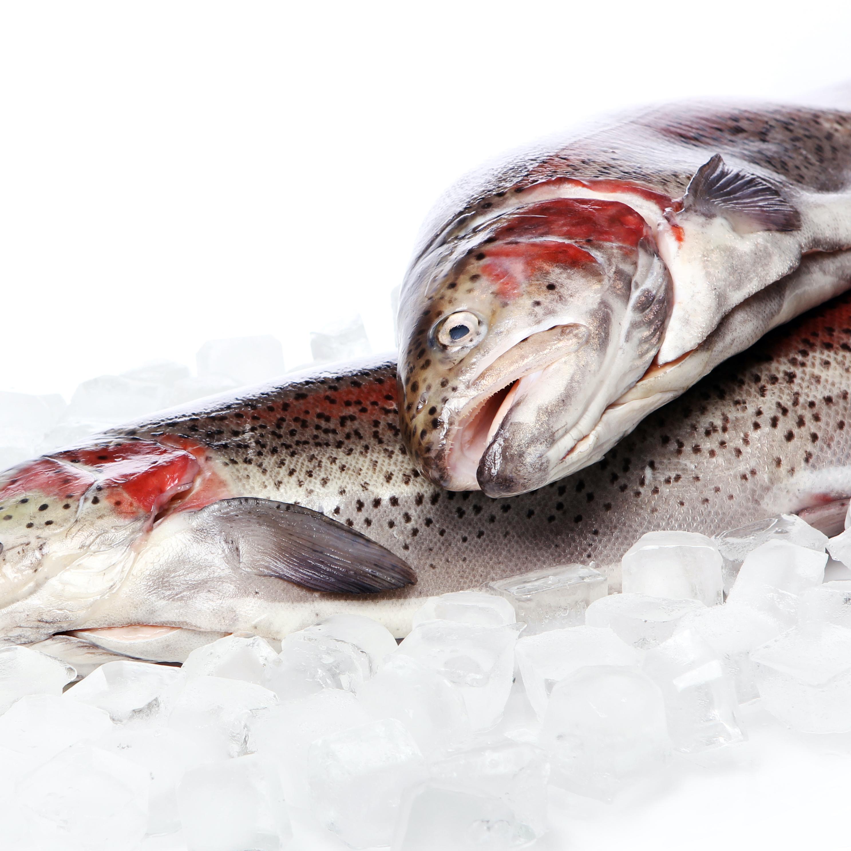 Производство товарной рыбы 6