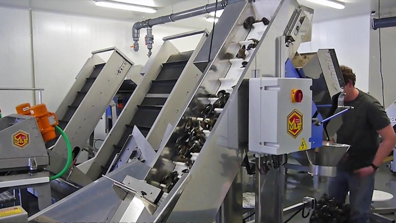 Технологическая линия для переработки товарных мидий 1